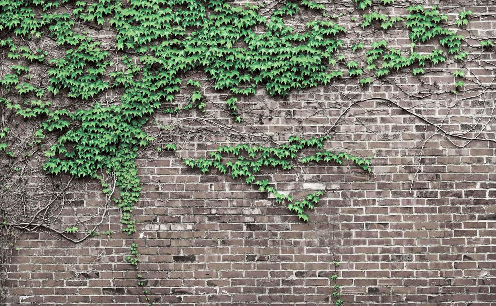 strutton-ground-openstudio-architects-ivy-brick-wall